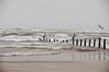 Padre Island National Seashore, TX (Michele C_) Tags: padreislandnationalseashore texas usa usasuddutexasdegalvestonàfortdavis1avril2013