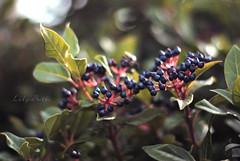 - (-LilyBeth) Tags: nature natura nikon dof depthoffield d3000 outside colors bokeh 50mm