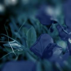 prendre des bleus (fransje 2103) Tags: composition blue bouché square schiedam