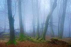homage to the old masters (Sandra Bartocha) Tags: sandrabartocha trees forest woods cdf homage romantic fog foggy mist rügen jasmund mv germany romanticism oldmasters