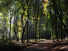 October afternoon (locusmeus) Tags: trees autumn holland 365