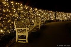 Hedge of Glow Worms - Glühwürmchenhecke (Sockenhummel) Tags: botanischergarten botanischergartenberlin christmasgarden christmasgardenberlin fuji x30 fujifilm finepix fujix30 hecke hedge park botanicalgarden berlin christmas weihnachten licht beleuchtung light glühwürmchen glowworm nacht night nightshot nachtaufnahme