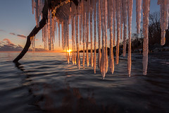cold calm (Marc McDermott) Tags: winter cold beautiful sunset lake water ontario icicles freezing calm serene tranquil clouds sun sky trees shore placid smooth formation light still