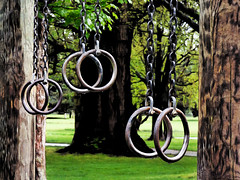 Tree Rings (Steve Taylor (Photography)) Tags: rings art digital contrast iron metal newzealand nz southisland canterbury christchurch hagleypark leaves bark trees grass path gymnastic drips exercise chain