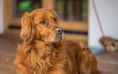 dog (13) - Maks (Vlado Ferenčić) Tags: catsdogs dogs animals animalplanet zagorje hrvatska hrvatskozagorje croatia nikond600 sigma15028macro vladoferencic