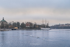 Swan Lake. (bgfotologue) Tags: 城市 2017 500px a72 bgphoto bird cpl church city cityscape current europe evening floating freeze glow ice image imaging kingisland kungsholmen landscape magic north photo photography polarizer river sony stockholm sunset swan sweden tourist travel tumblr twilight winter bellphoto 偏光鏡 冬 冰 北歐 國皇島 天鵝 攝影 教堂 斯德哥爾摩 旅行 旅遊 日落 晚霞 歐洲 水流 河流 流冰 浮冰 瑞典 都市 風光 風景 鳥 黃昏
