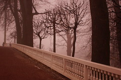 In the Park (Sergei P. Zubkov) Tags: march peterhof fog park trees outdoor spring