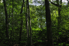 bright forest (Molly Des Jardin) Tags: park trees light usa green leaves forest dark shadows state pennsylvania sunny lancaster brilliant 2014 susquehannock drumore 43215mm