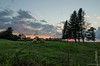 sheep farm (paul noble photography) Tags: trees sunset clouds fence nikon flickr sheep dusk farm fineart maine newengland redsky summerevening goldenhour vacationland noble freelancephotographer downeast awesomeclouds 1224f4 summerinmaine visitmaine 1224f4tokina nikond7000 paulnobleimages mainefineartphotography goldenhournikond7000 paulnoblephotography fineartamericapaulnobleimages freelancephotographersinportlandmaine mainething