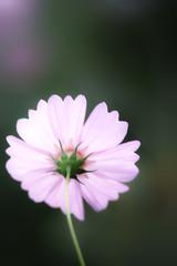 flickr_150923_01 (est150311) Tags: japan sigma nara sd15