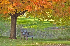 My favorite reading bench (Pureheart11) Tags: autumn coth sugarmapletree sunrays5