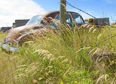 More Canadian Rust In The Grass (montanatom1950) Tags: canada cars junk rust rusty junkyard crusty
