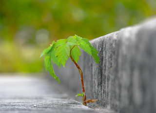 Growth is the Only Evidence of Life