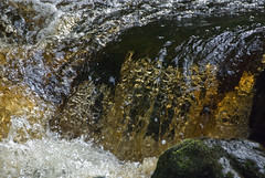 14091504 Lovers' Leap-Darglr R (Philip D Ryan) Tags: ireland river waterfall rapids gorge wicklow enniskerry bray loversleap countywicklow dargle