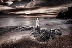 _4998 (Robert Björkén (Hobbyfotograf)) Tags: longexposure sea cliff brown lake bird rocks seagull serenity serene lonely mariestad ekudden
