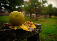 rainy Sunday morning (skistar64) Tags: morning autumn outside rainyday herbst krnten carinthia morgen pisweg regentag daham drausen