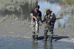 20150807_visser bij Knik River in Anchorage (Travel4Two) Tags: alaska anchorage c0 s0 verenigdestaten 5000k adl0