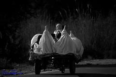 Shuttlecock Burqa Kot Addu , Pakistan (TARIQ HAMEED SULEMANI) Tags: travel pakistan summer tourism colors rural trekking canon photography nikon hijab culture sensational punjab kot tariq addu rurallife supershot concordians sulemani tariqhameedsulemani