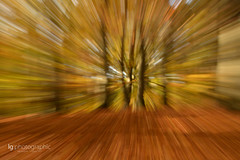 Zoom Burst autumn (lg-photographic) Tags: wood trees color tree fall leave nature colors leaves forest germany deutschland nikon warm long exposure mood moody autum zoom outdoor laub herbst natur burst holz effect wald blätter farbe bäume baum worpswede stimmung farben drausen d5200