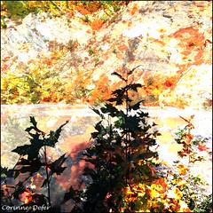 """""""Couleurs d'automne"""" (Corinne DEFER - DoubleCo) Tags: naturaleza france colour tree nature landscapes rbol  albero francia arbre paesaggi baum paysages couleur  paisagens landschaften colorisation alpesmaritimes vgtal valleduvar carrfranais corinnedefer"""