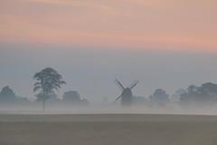Tree and windmill