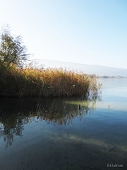 Quiet afternoon (nathaliedunaigre) Tags: autumn light lake annecy automne reflections reeds shadows lumire lac reflets roseaux ombres
