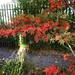 Fall branches near dentist 3