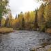 Caminhada em busca de ursos pelo rio Russo