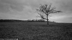 The lonely Tree under the stormy Sky 2. (andreasheinrich) Tags: november autumn blackandwhite tree forest germany landscape deutschland moody herbst felder stormy fields landschaft baum badenwürttemberg blackandwhitephotos düster wälder neckarsulm schwarzweis stürmisch nikond7000