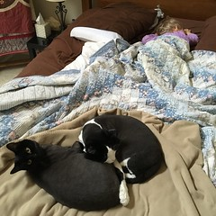 Sleeping the day away... (ShanMcG213) Tags: cats ava cat blackcat bed toddler huntsville alabama sleepy lazy sleepyhead em myniece emmarose cina hsv sleepycat blackandwhitecat lazycats huntsvilleal whiteandblackcat snugglebuddies cuddlebuddies lifewithemmarose