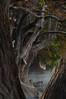 FOREST (NIKONIANO) Tags: trees paisajes tree misty forest sunrise nikon place magic surreal paisaje powerful magia ramas tranquilidad raíces mistical supershot ahuehuete nikoniano flickrdiamond platinumphotograph nikond300 lugaresdeméxico lagodecamecuaro enzamora camecuaromichoacan ahuehuetedemoctezuma sergioalfaroromero enmichoacán lagosdemichoacán lugaresdemichoacán tangancícuaromichoacán camécuaro tangancícuaro encamécuaro