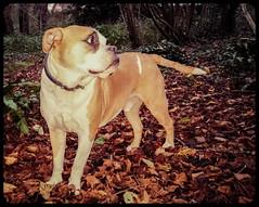 Hooch (Mark Hobbs@Chepstow) Tags: cameraphone camera dog wales train photography nikon ship d750 fullframe fx chepstow monmouthshire hgv d7100 markhobbs