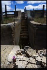 Baño de ovejas abandonado en Pilahue