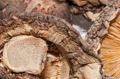 Dried Shiitake Mushrooms (Victor Wong (sfe-co2)) Tags: food nature mushroom vegetables asian mushrooms cuisine japanese still healthy asia raw natural herbs traditional chinese dry vegetable structure gourmet exotic health fungus thai ingredients vegetarian medicine produce organic dried gill edible fragile medicinal textured shitake shiitake nutrition ingredient