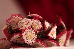 İğne oyası - Needle lace (halukderinöz) Tags: iğne needle oya lace handmade elişi still life ankara türkiye turkey canoneos40d eos40d hd