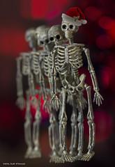 Ghosts of Christmas Past (scottnj) Tags: ghost ghostofchristmaspast holiday skeleton santahat bokeh christmaslights red colorful christmas christmasdecorations bones skull skulls macro scottodonnellphotography lastchristmasigaveyoumyheart