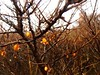 orange is the new black (LukasRoth97) Tags: natur nature natürlich niederlande netherland busch düne dünen turm leuchtturm foggy nebel winter hiking hike holland meer