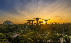awaken (jaywu429) Tags: inexplore explore beautiful buildings architecture sun sunrise tree grass sony1635 morning dawn clouds supertree gardensbythebay landscape skyline sky sonya7r singapore sony