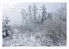 Winter Wonderland (friedrichfrank1966) Tags: winter wonderland siegen white snow schnee outdoor wanderung tour forest nikon sigma 1224 rahmen nature germany spaziergang