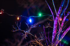 The Colors (Evan's Life Through The Lens) Tags: camera sony a7rii lens glass minolta 135mm f28 vintage beautiful christmas lights decoration light night dark long exposure cold autumn home family cozy yard