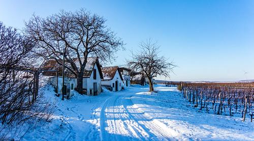 Hoflein, Vineyards