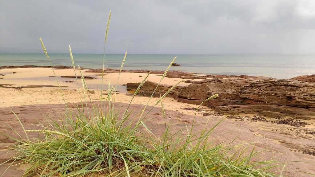 Grasses on Embo Beach