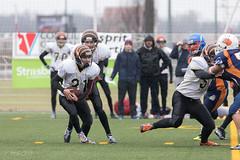 4D3A3037 (marcwalter1501) Tags: minotaure tigres strasbourg footballaméricain football sportdéquipe sport exterieur match nancy