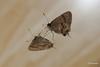 Vista superior e inferior (jbsaramago) Tags: jbsaramago saramago uberlandiamg natureza nature borboletas