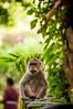 pura bukit sari (Sam Scholes) Tags: sangehmonkeyforest badungregency purabukitsari hinduism hindu travel bukitsaritemple bali palaforest sangeh holymonkeyforest vacation indonesia denpasar moneyforest abiansemal id