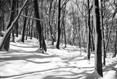 Forest in Iwamizawa park (threepinner) Tags: kodak microfilm imagelink hq selfdeveloped iwamizawa hokkaidou hokkaido northernjapan japan winter forest snow woods 岩見沢 北海道 北日本 日本 森 mountainsnaps 利根別原生林