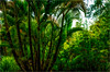 How Green was my Maui (Patricia Colleen) Tags: kulabotanicalgardens maui hawaii kula ilovepalmtrees palm greengreengreen lushlushlush itwasheavenly