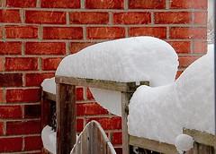 The Gate (Haytham M.) Tags: outdoor snowing backyard fresh white fluff gate snow