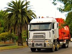 photo by secret squirrel (secret squirrel6) Tags: truck vehicle secretsquirrel6truckphotos craigjohnsontruckphotos freightliner argosy australiantruck bigrig trucking palmtrees mirboonorth cabover 2015 tank twinsteer
