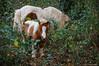 Madre e hijo (SantiMB.Photos) Tags: 2blog 2tumblr 2ig caballos horses baztán navarra otoño vacaciones2015 leorlaz españa esp